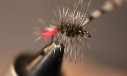 How to tie the perfect fly – Grayling Witch