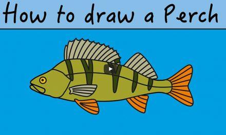 Kids Club | How to Draw Perch