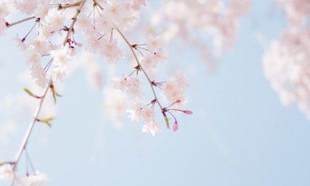 Blossom Season Begins