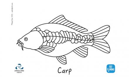 Kids Club | Colouring in – carp
