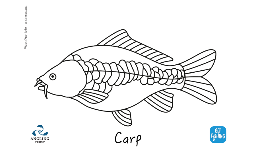 Carp line-A4-Andy Steer -Fishing Knots