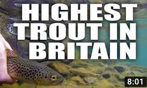 The Highest Altitude UK Trout?
