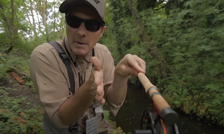 Wild Trout Fishing On A Tiny Urban Stream
