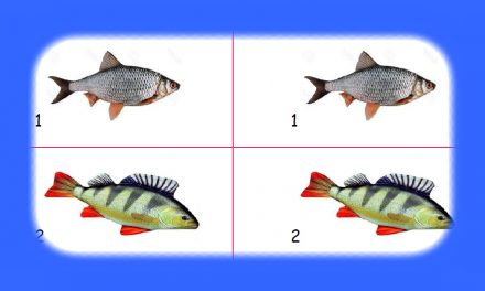 Kids Club | Home Learning – Fish Facts
