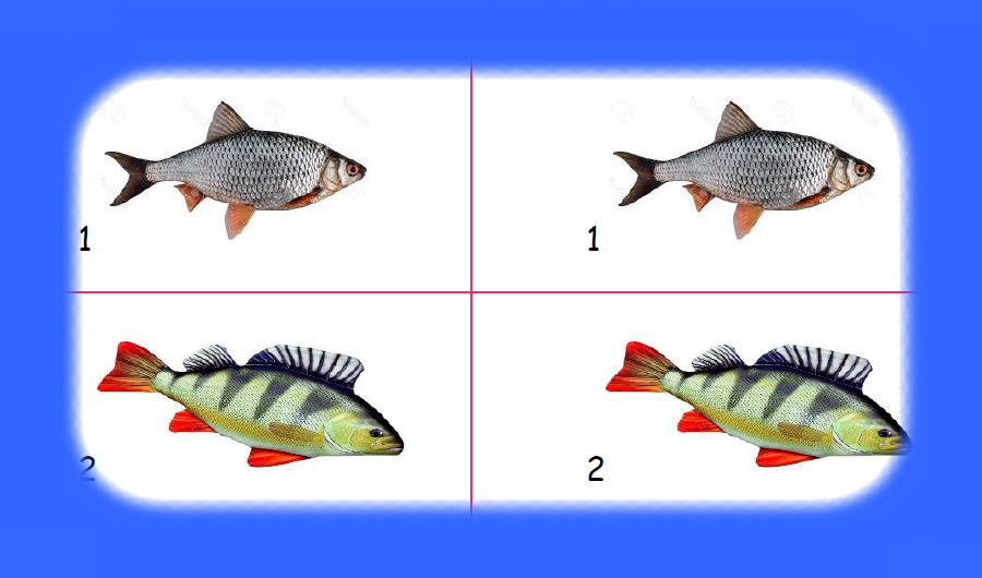 Kids Club   Home Learning – Fish Facts