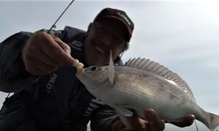 Sea Fishing Tips for Beginners – The Paternoster Rig by TAFishing Show
