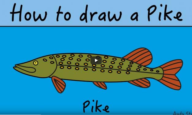 Kids Club | How to Draw Pike