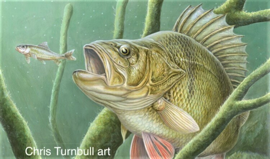 When Angling Meets Art: Chris Turnbull interview