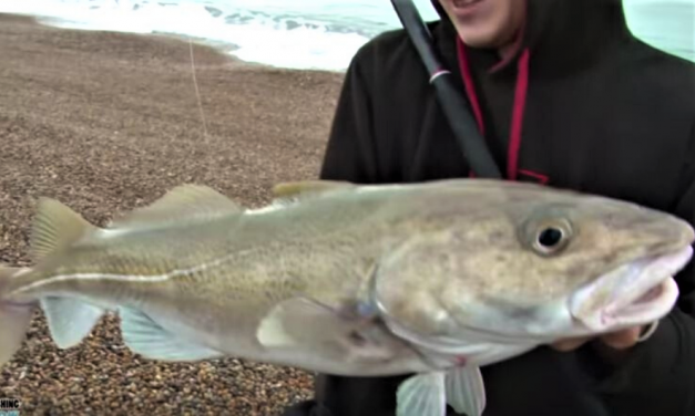 Fishing for big cod from the beach with TAFishing