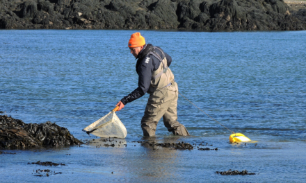 Collecting prawns – essential livebait for bass