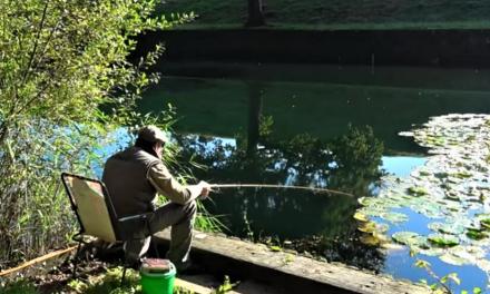 Idyllic float fishing for crucians