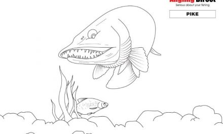 Colour the fish – even more fish to colour in!