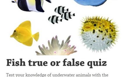 True or False Fish Quiz
