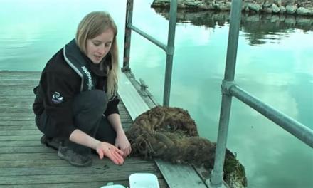 Check Clean Dry – killer shrimp at Grafham Water
