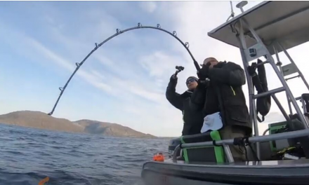 Monster halibut fishing at Havoysund in Norway