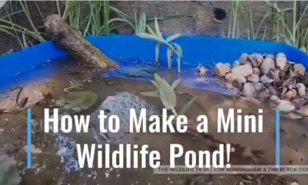 How to make your own mini wildlife pond