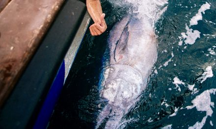 Atlantic Bluefin Tuna: A CHART for the UK