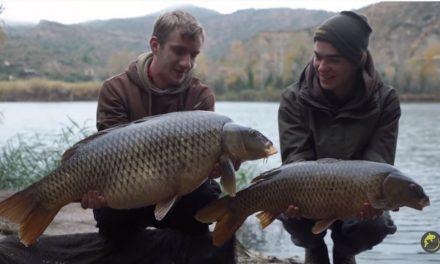 CARP AND CATFISH FISHING on the Ebro: THE EBRO SAFARI