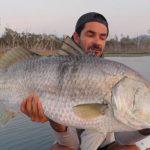 Topwater Dream Fish! (Barramundi).