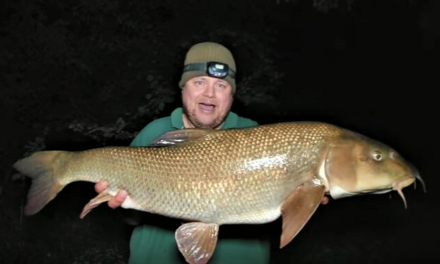 Big barbel on a centrepin