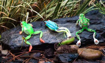 Frog Fishing !