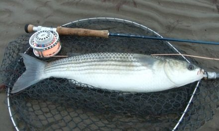 Chasing the British Bonefish: Mullet on the fly