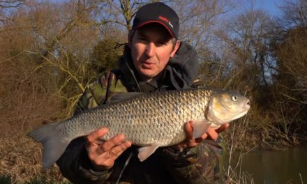 Catching BIG Chub – Three 6lb+ Chub In a Day!