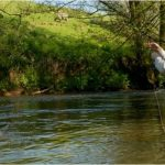 11 Reasons You Should Try Fly Fishing!
