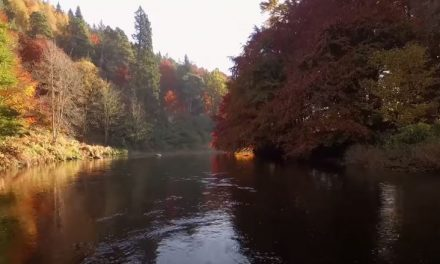 To The Journey's End: The Lifecycle of the Atlantic Salmon
