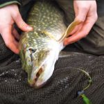 How to Handle & Unhook Pike