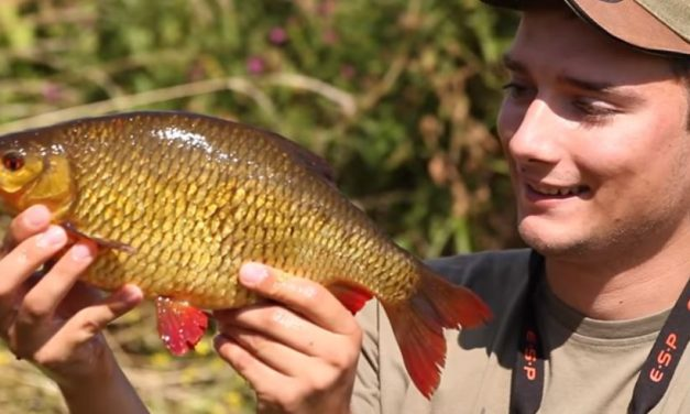 6 Top Tips For Catching Rudd