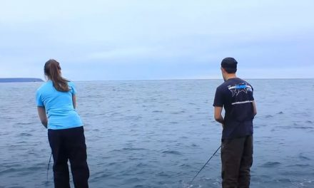 Mackerel Fishing From the Shore