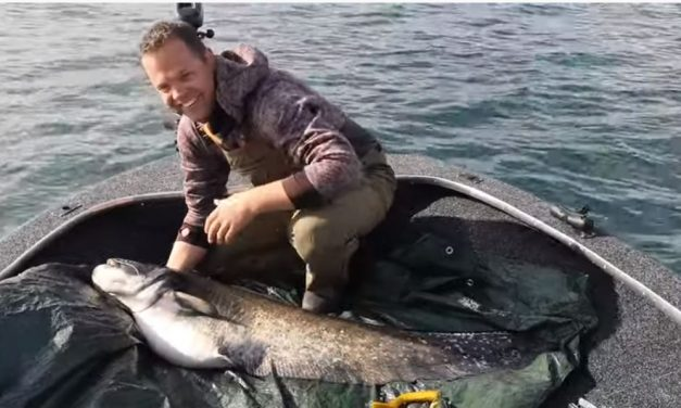 Wels Catfish hit pike lure – underwater footage