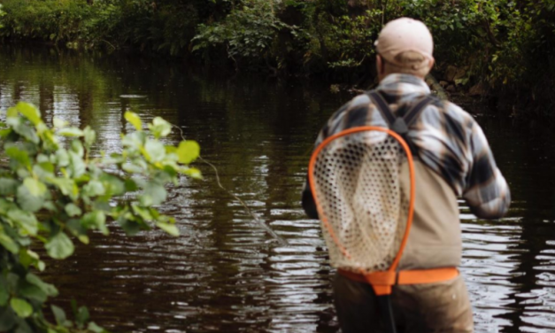 Dry Fly Fishing: What you Really Need To Know