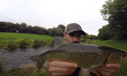 Chub Fishing with Supermarket Bread