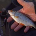 20 AWESOME Roach Fishing Tips!