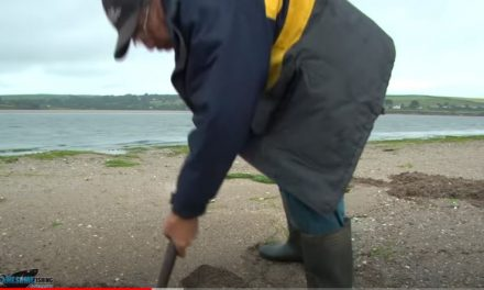 How to Dig for Sandeels!