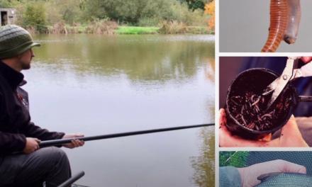 Chopped Worm Fishing with Dom Garnett