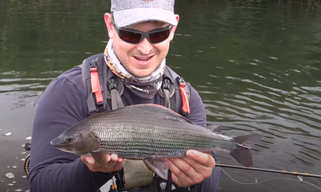 Fly fishing for Huge Grayling