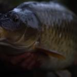 Autumn Carp Fishing Masterclass – Rob Burgess