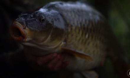 Autumn Carp Fishing Masterclass – Rob Burgess