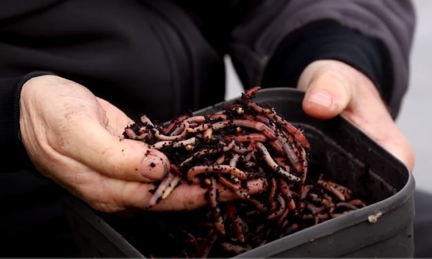 Chopped Worm Fishing with Mark Pollard