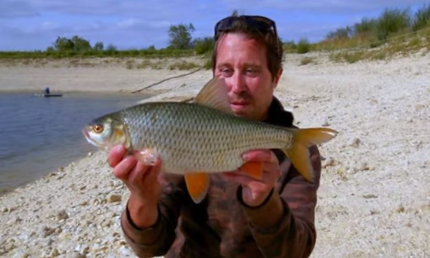 Huge Roach with Rich Wilby