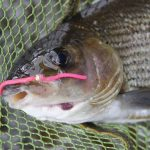 RIver Grayling Tactics