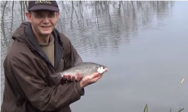Quest for big roach on the Dorset Stour
