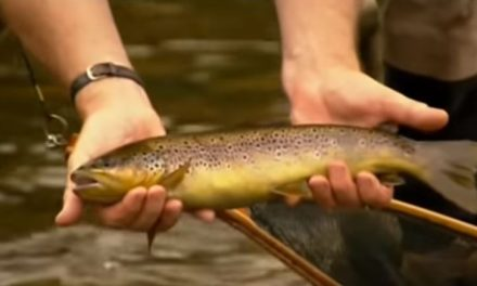 Streamer Fishing with Oliver Edwards
