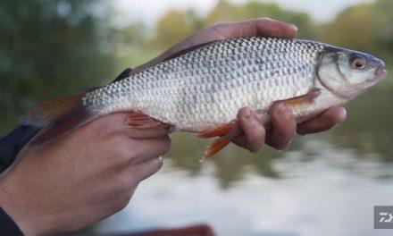 Stillwater Roach Fishing Masterclass