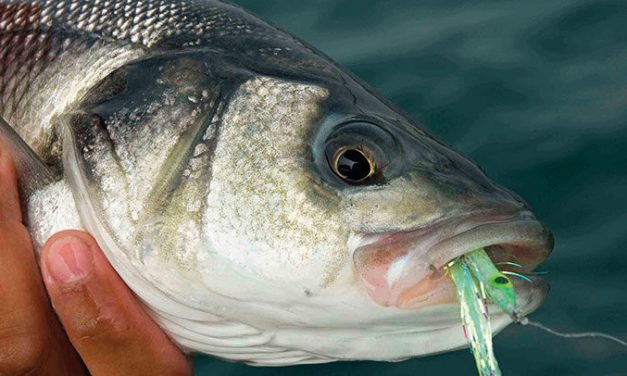 Catch your first sea bass! a Beginner's guide to Lure fishing for the species