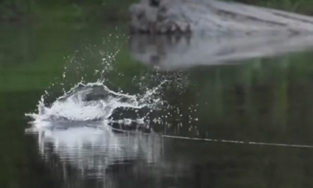 Spectacular DRY FLY takes!