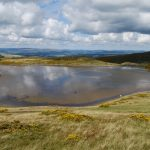 Wild carp in the Welsh Hills
